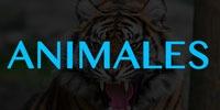 Machines A Sous Animales (La Nature)