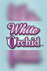 White Orchid Jouer Machine à Sous